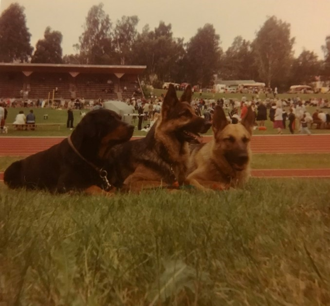 Bella (rottweiler), Ani ja Gina (saksanpaimenkoiria) koiranäyttelyssä